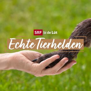 SRF bi de Lüt – Echte Tierhelden HD