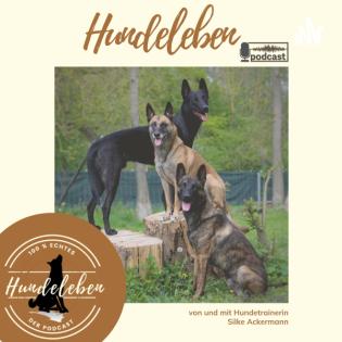 Hundeleben Podcast - Alltag, Erfahrungen und Tipps zur Hundeerziehung aus dem echten Hundeleben