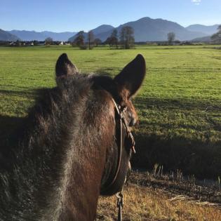 Rund ums Pferd - Geschichten die das Leben schreibt