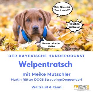 Welpentratsch - Der bayerische Hundepodcast
