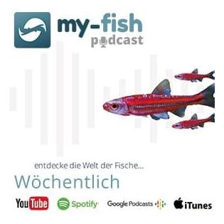 my-fish.org – Aus Freude an der Aquaristik (Aus Freude an der Aquaristik Podcast)