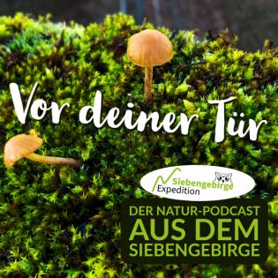 Expedition Siebengebirge - Über Stock und Stein