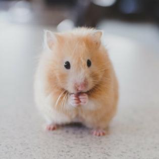 Die Hamsterküche