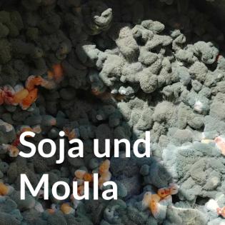 Soja und Moula
