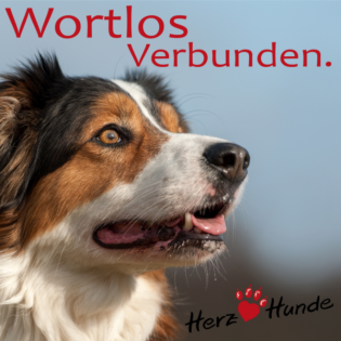 Deine Gassi-Runde als Heldenreise > mit Deinem Hund wortlos verbunden!