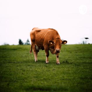 Sollte man sich Vegetarisch ernähren?
