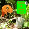 Fuchs & Hase 1: So viele Fragen