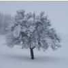 167 Winter -  Reduktion aufs Wesentliche