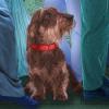 Hundeleben - Philosophische Menschheitsbetrachtungen eines Vierbeiners