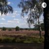 Kleine Auszeit - Die Wiese