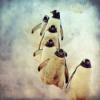 #53 - momo erzählt - Der Weg des Pinguins