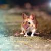 #23 - Slivia Angel - Die ängstliche Maus