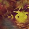#21 - momo erzählt - Flöte im See