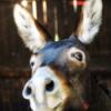 #20 - momo erzählt - Der Prinz mit den Eselsohren