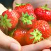 #8 - momo erzählt - Warum es Erdbeeren gibt