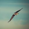 #7 - momo erzählt - Huhn oder Adler