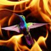 #6 - momo erzählt - Das Feuer und der Kolibri
