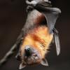 #3 - Silvia Hein - Die Ratte die sich fledermauste