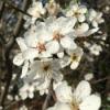 # 2 - momo erzählt - das Blütenmeer