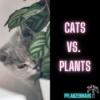 Cats vs. Plants ?!