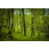 MSC006 – Schottlands Wald