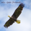 063 - Koro kehrt zurück in die Alten Wälder Download