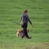 P002: Wie korrigiere ich meinen Hund sinnvoll in der Fußarbeit Download