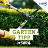 SWR4 Gartentipp: Thujahecke