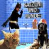 38. Katzen und Hunde