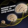 Warum unser Gehirn so groß wurde - Die Extra-Portion an grauen Zellen