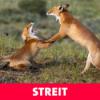 Streit – Halt doch dein Maul!