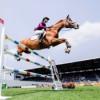 Das Pferd - Partner oder Sportgerät?