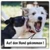 AdHg 148 - Hund verteidigen?