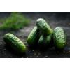 EXP036 – Gurken sind Nüsse