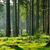 Musik für einen Waldspaziergang