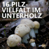#16 Pilzvielfalt im Unterholz