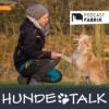 Unsichere Hunde - Vertrauen aufbauen und Sicherheit vermitteln Download