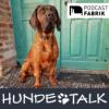 Hundephysiotherapie am praktischen Beispiel namens Slash Download
