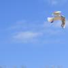 #38 Taube, Feuer, Wind - die Symbole des Heiligen Geistes