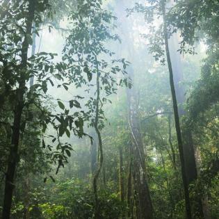 Waldgeschichten – Folge 1: Aus dem wilden Amazonas in die Weltläden