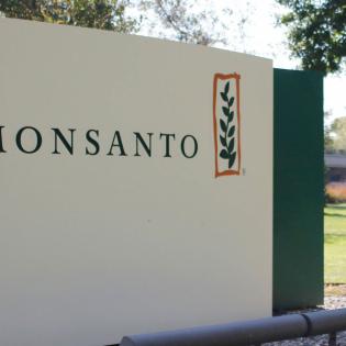 Kein Jahrestag zum Feiern: Monsanto-Übernahme durch Bayer