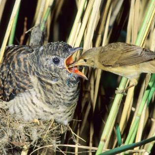 Wir begrüßen Vogelkinder - Teil 3