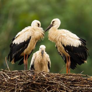 Wir begrüßen Vogelkinder - Teil 2