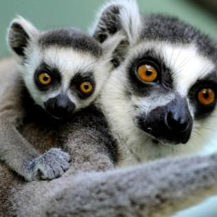 Weltreise 7 - Madagaskar und Nepal