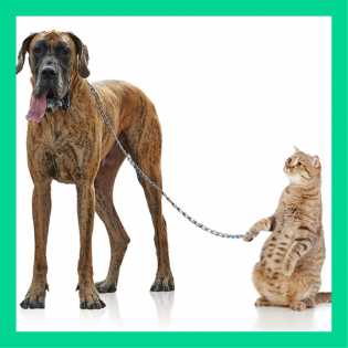 Lachlabor: Gibt es auch Tiere, die Haustiere haben?