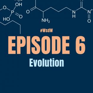 WsdW006 Eine andere Art der Evolution