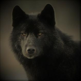Episode 34 - Ein Wolf namens Romeo