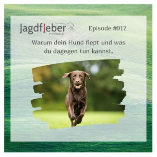 P017: Warum dein Hund fiept und was du dagegen tun kannst.