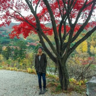 IEC im Ausland: Melanie empfiehlt Südkorea und Japan