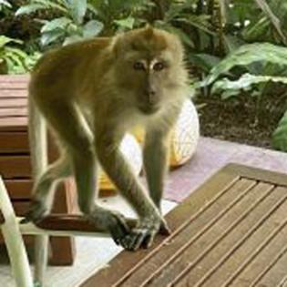 Affen und Waffen